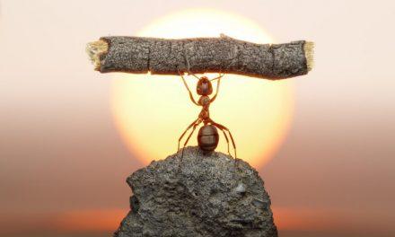 Si tout le monde était aussi vaillant que les fourmis