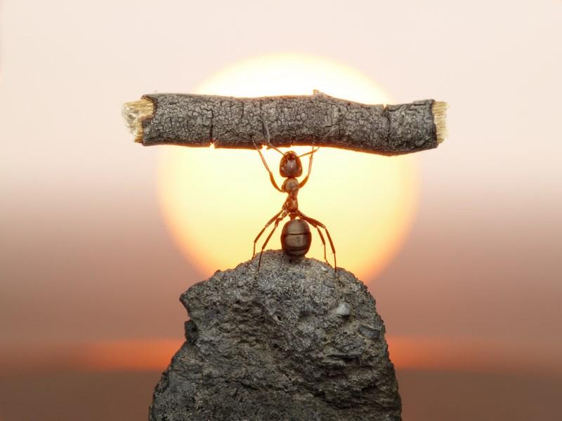 Si tout le monde était aussi vaillant que les fourmies