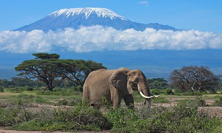 Découvrir Tanzanie de façon originale avec Safarivo